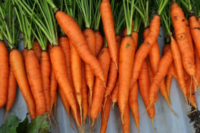 coltivazione-carota_o2