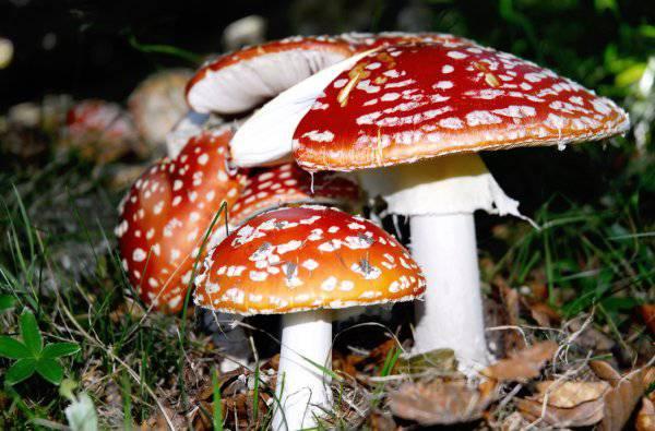 funghi-come-nascono-cosa-dove