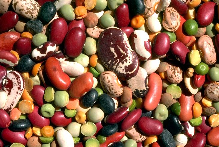 legumi-proteine