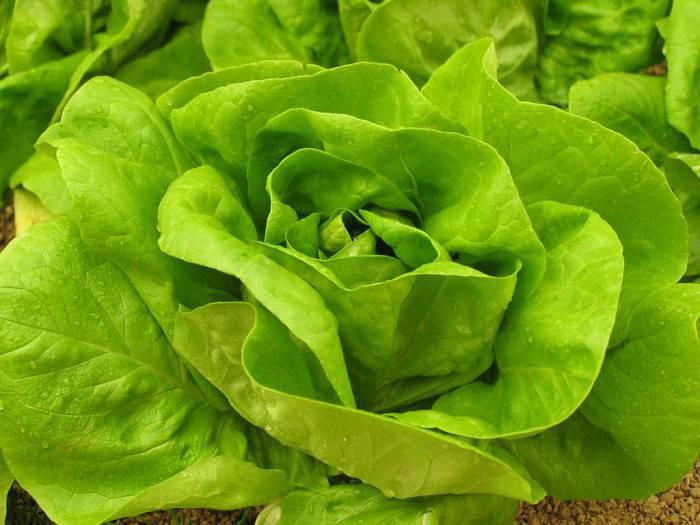 salatalevel