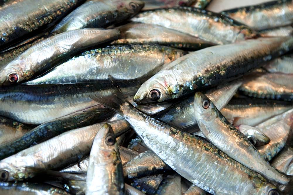 Dieta mediterranea i benefici del pesce sulla nostra tavola ricette di - Pesci comuni in tavola ...