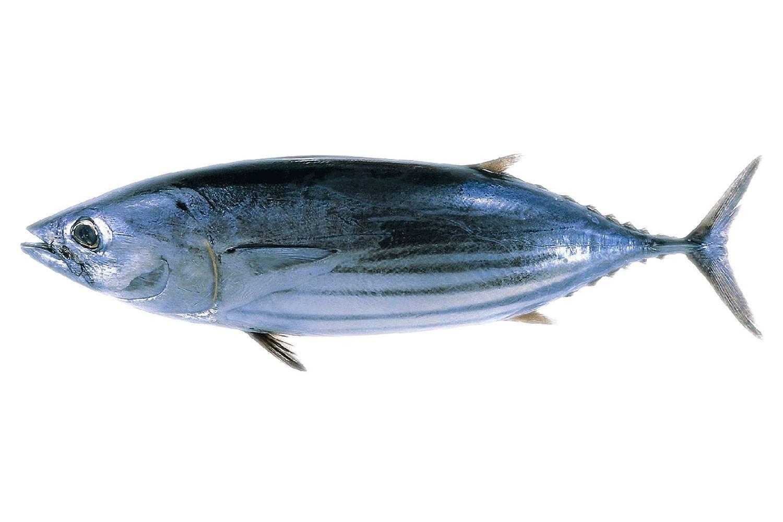Allarme inquinamento ecco 5 pesci da non mangiare for Comprare pesci