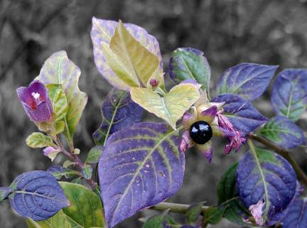 Gli Antidolorifici Naturali Che Funzionano Meglio Dell'Aspirina