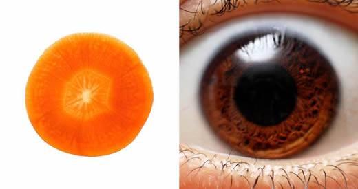 carote-vista