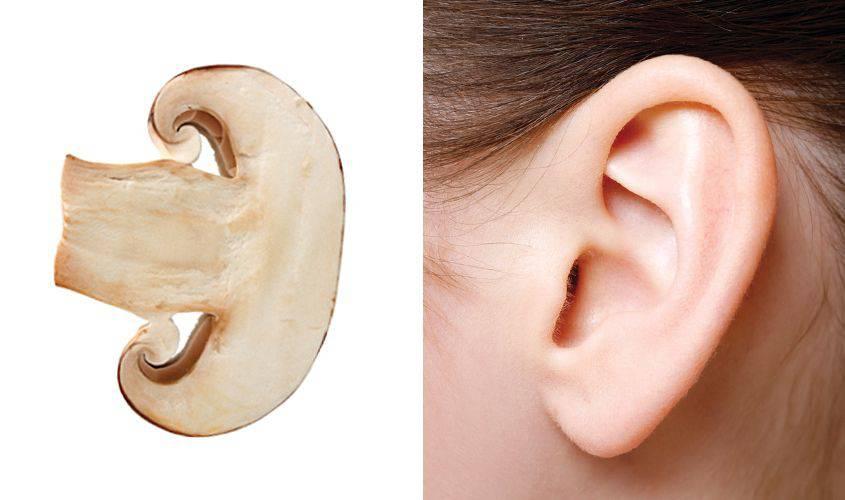 funghi-orecchie