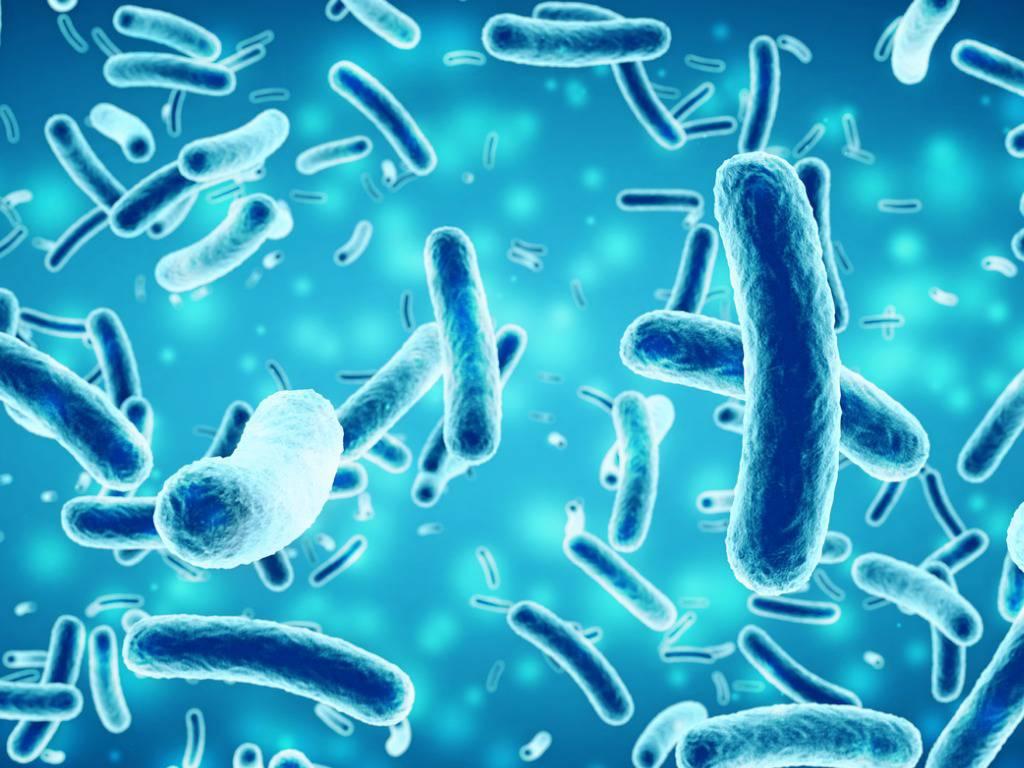 Escherichia Coli, ecco in quali alimenti si trova il batterio killer