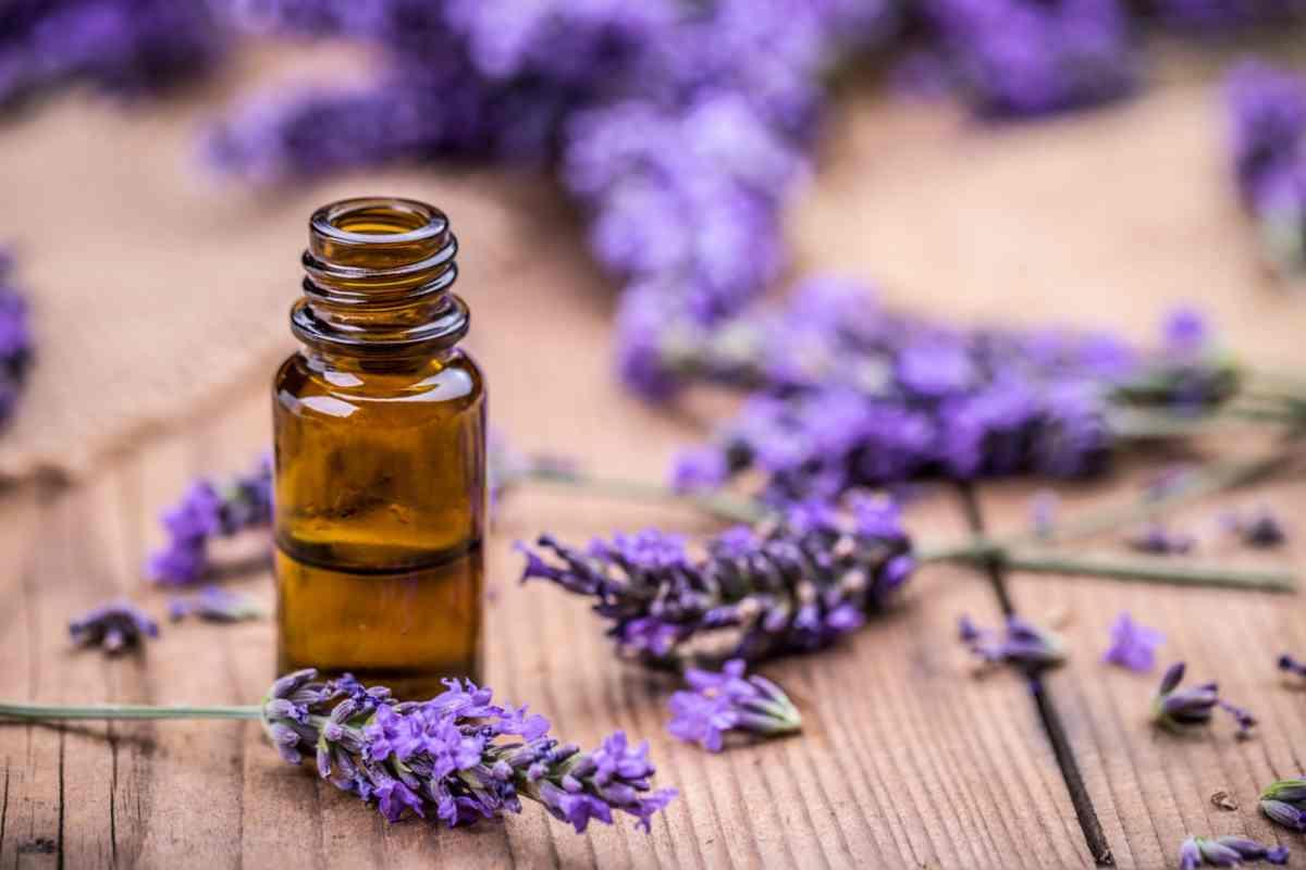 Olio essenziale di lavanda: le molteplici proprietà terapeutiche