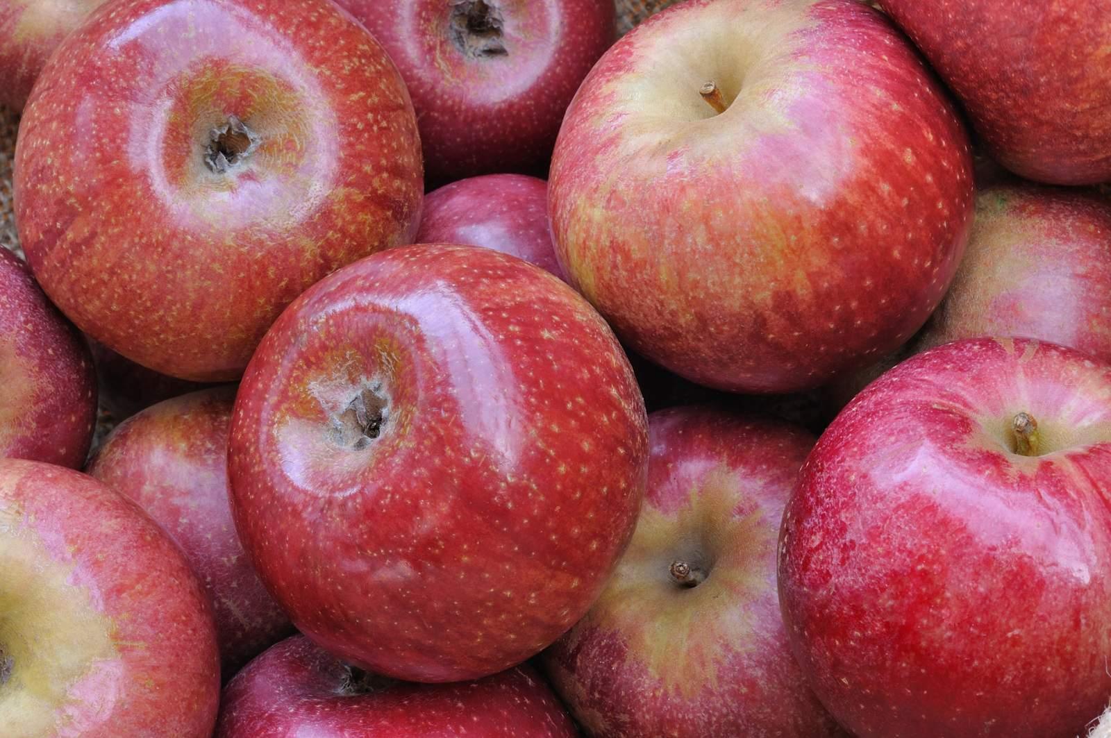 Liquore alla mela annurca: la ricetta della tradizione napoletana