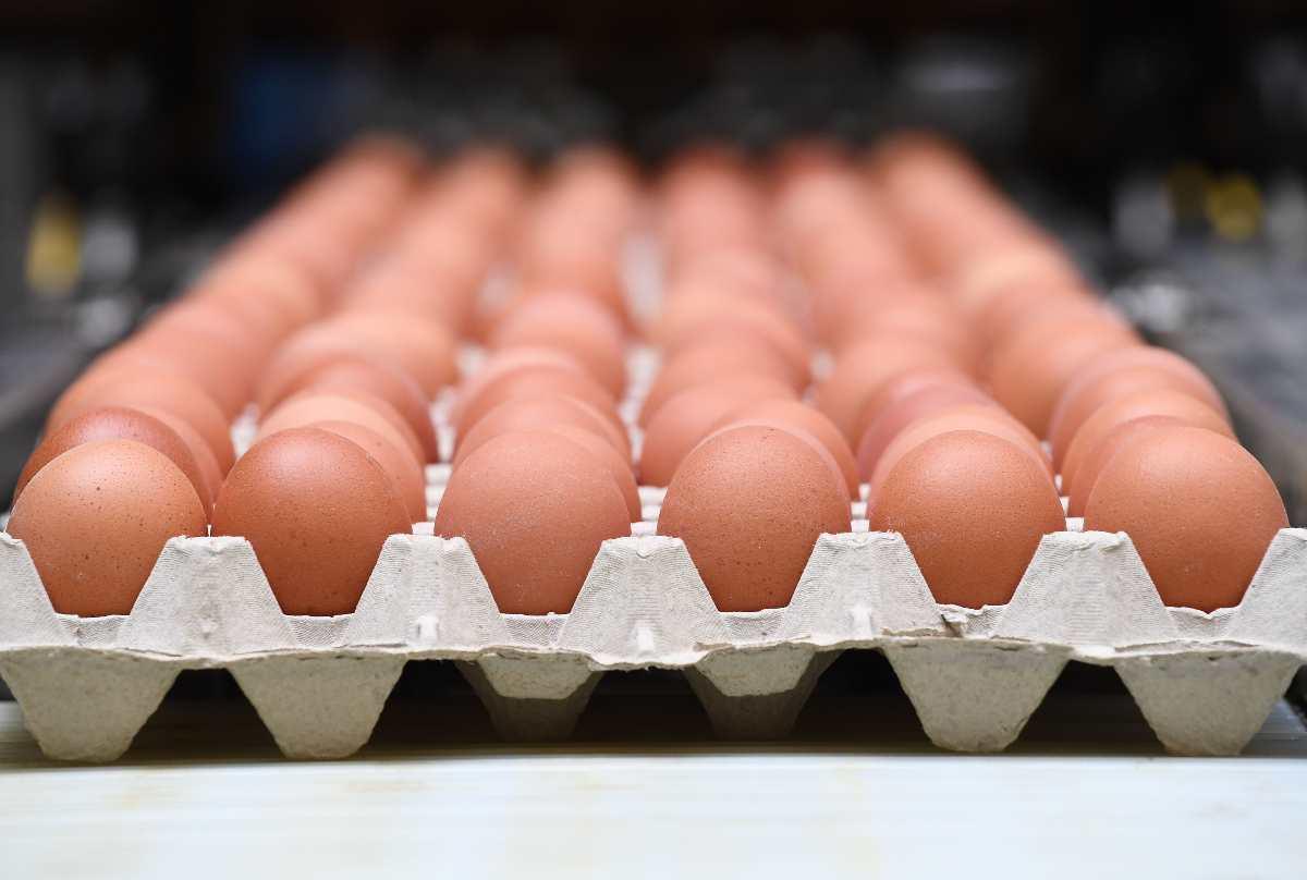 Uova biologiche ritirate dal mercato: l'allarme del Ministero della Salute