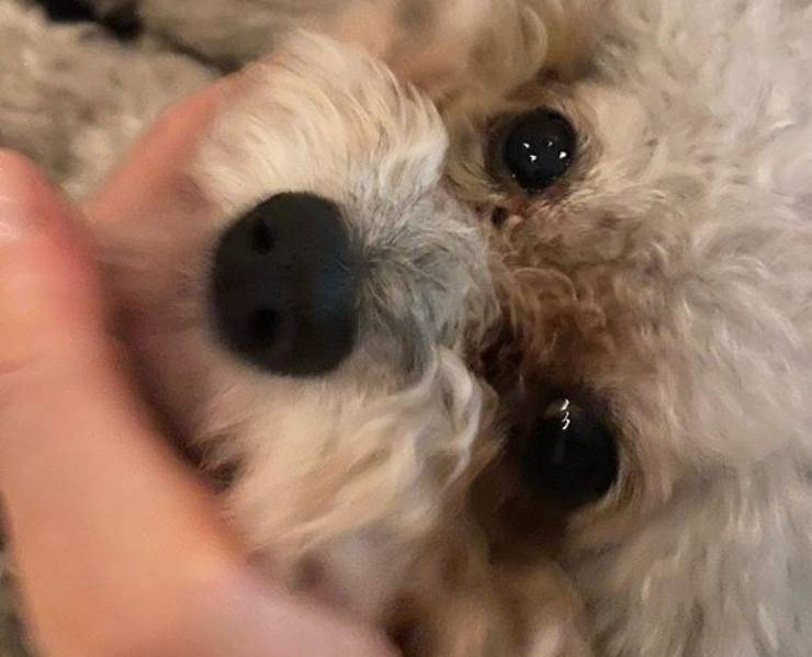 Il cagnolino di Elisa Isoardi non sta bene? Cos'è successo e perché non era in trasmissione