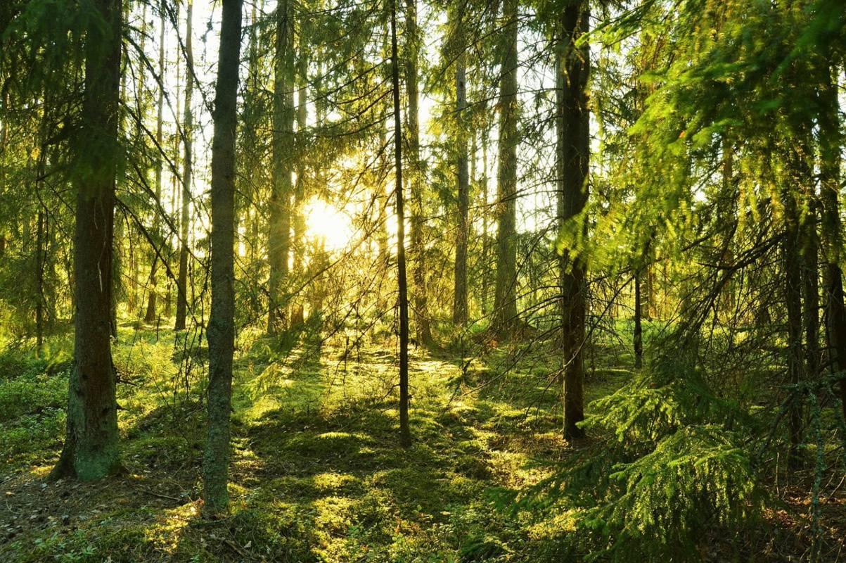 Svezia, arriva il ristorante con sei tavoli in mezzo alla foresta