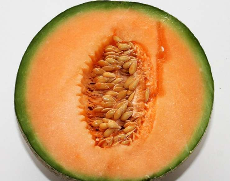 granita melone