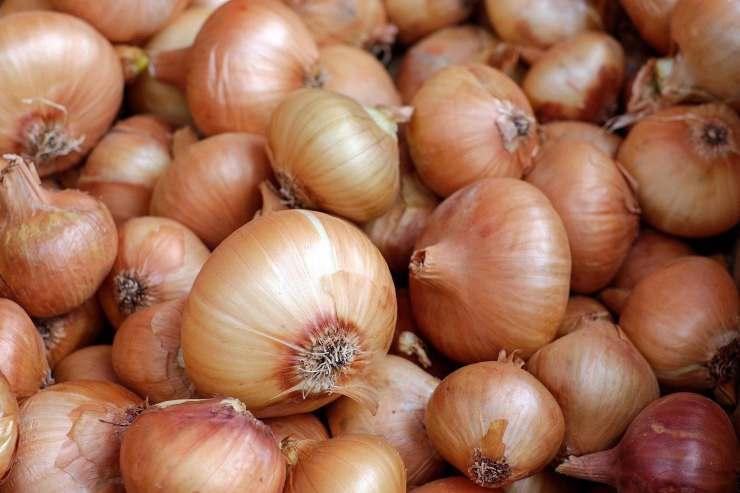 conservare cipolla