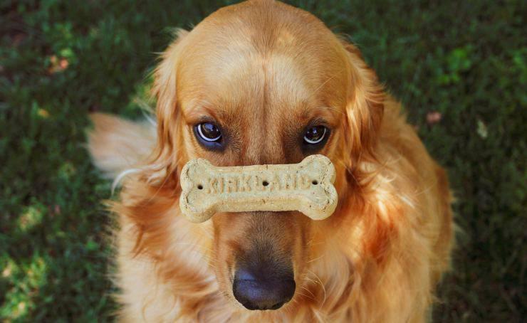 cagnolino con biscotto