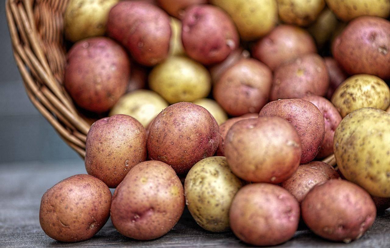 Patate ripiene al forno: la ricetta vegana vi farà leccare i baffi
