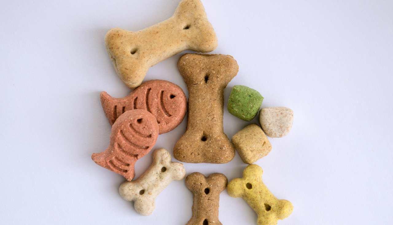 Biscotti per cani: Ricetta fai da te facile e veloce per i nostri amici a 4 zampe