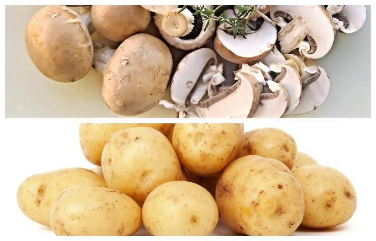 Patate e funghi contorno