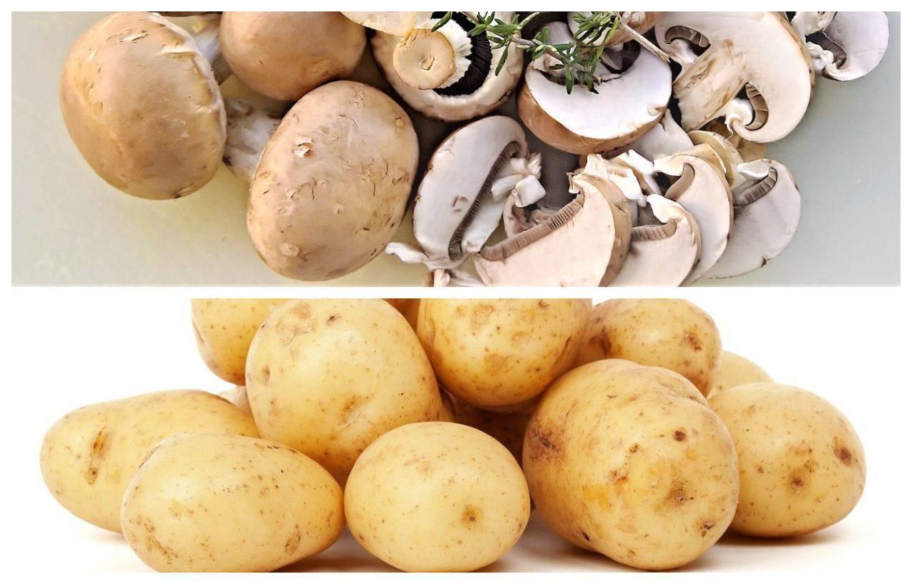 Patate e funghi, il contorno che non ti aspetti: cotto in forno e delizioso!