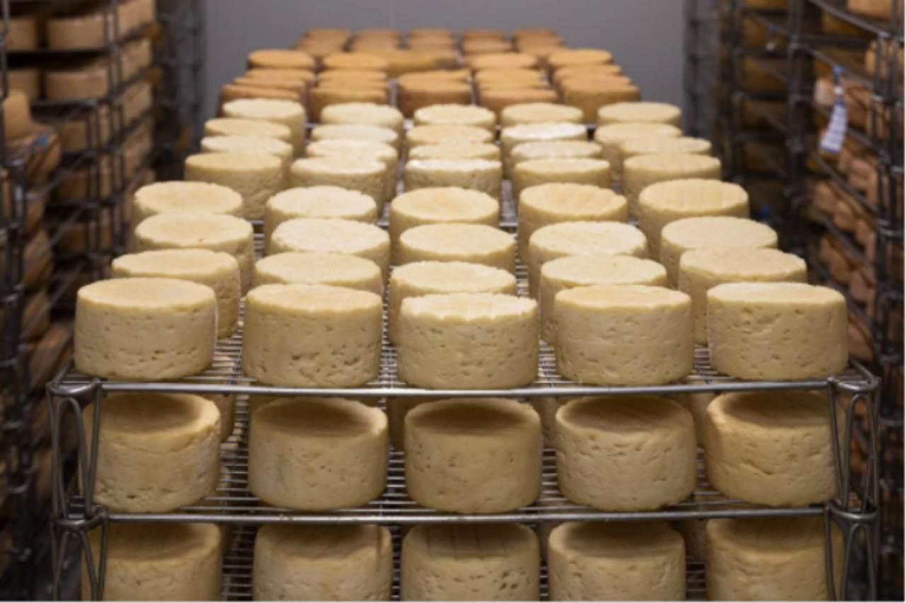 Allerta alimentare, rischio chimico: Ministero Salute ritira 9 formaggi