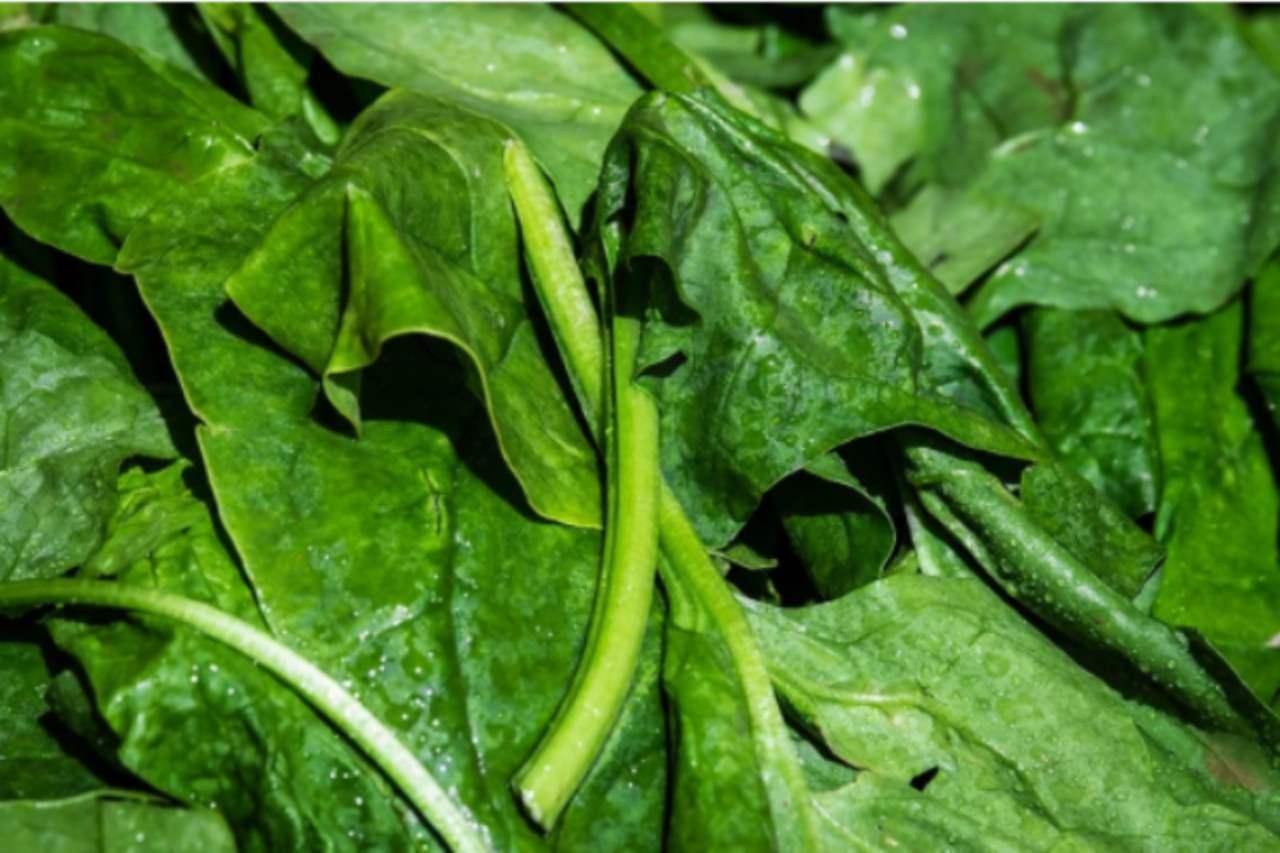 Rustico ricotta e spinaci: l'ingrediente 'segreto' per renderlo gustosissimo