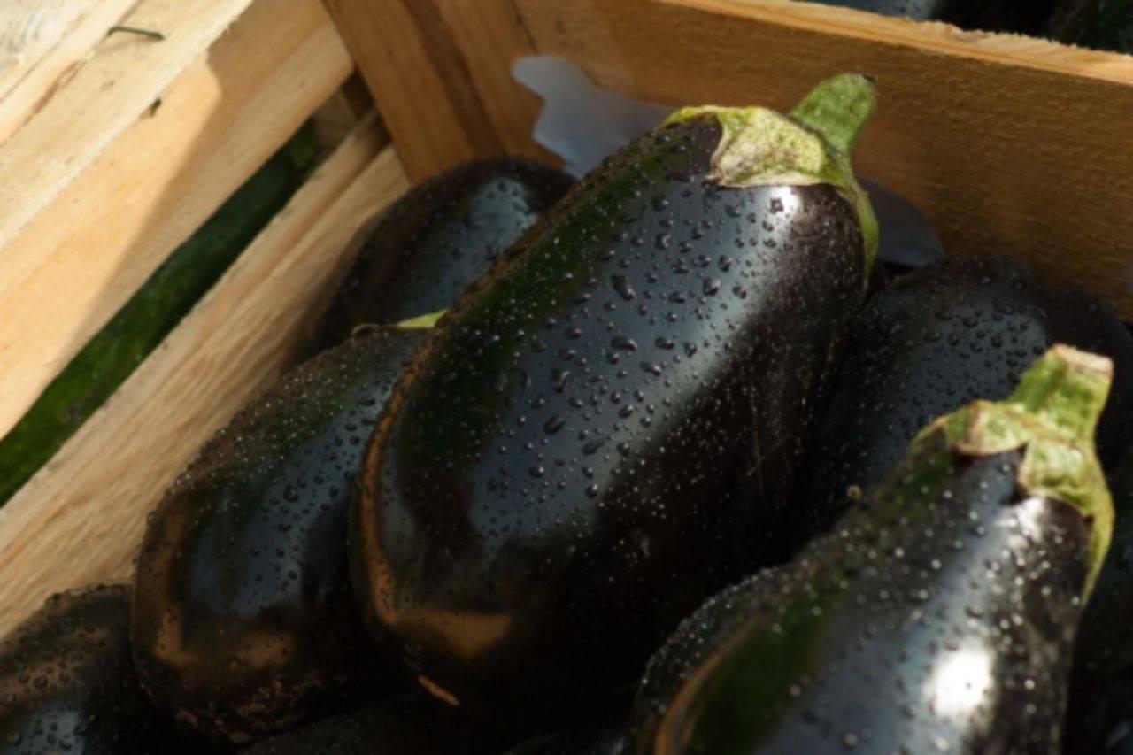 Pizzette di melanzane: il contorno velocissimo pronto in 20 minuti
