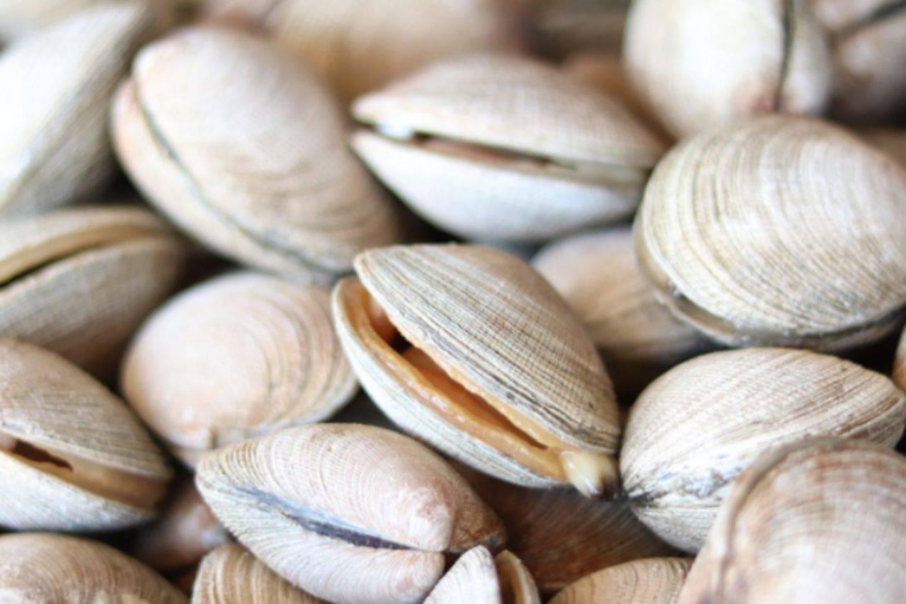 Gnocchi con le vongole: mantecali con questo ingrediente, saranno superlativi