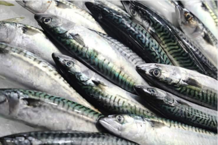 Sgombro in padella: il pesce senza spine facile e veloce da cucinare