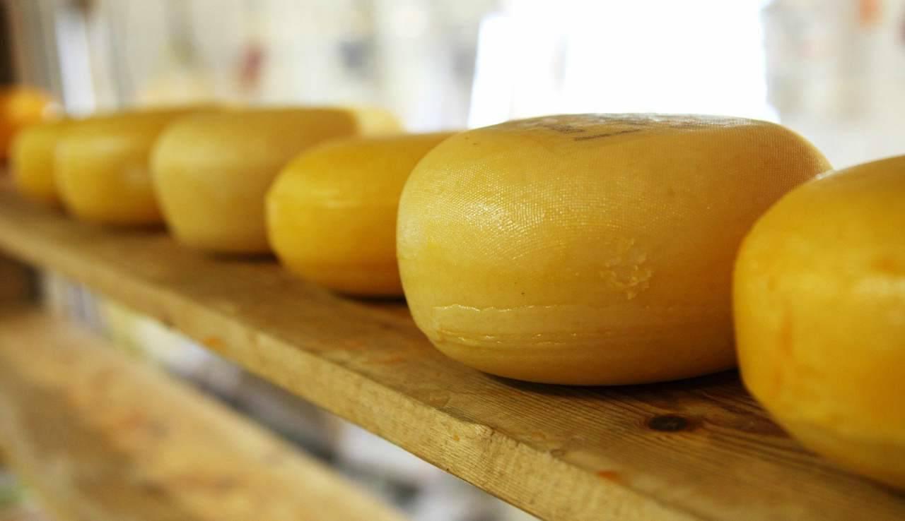 allerta alimentare formaggio
