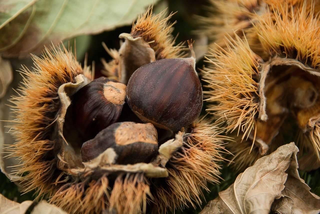Come conservare le castagne: il metodo super goloso che non ti aspetti