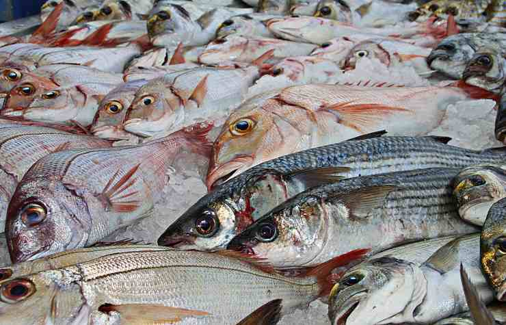 Convincere bimbi pesce