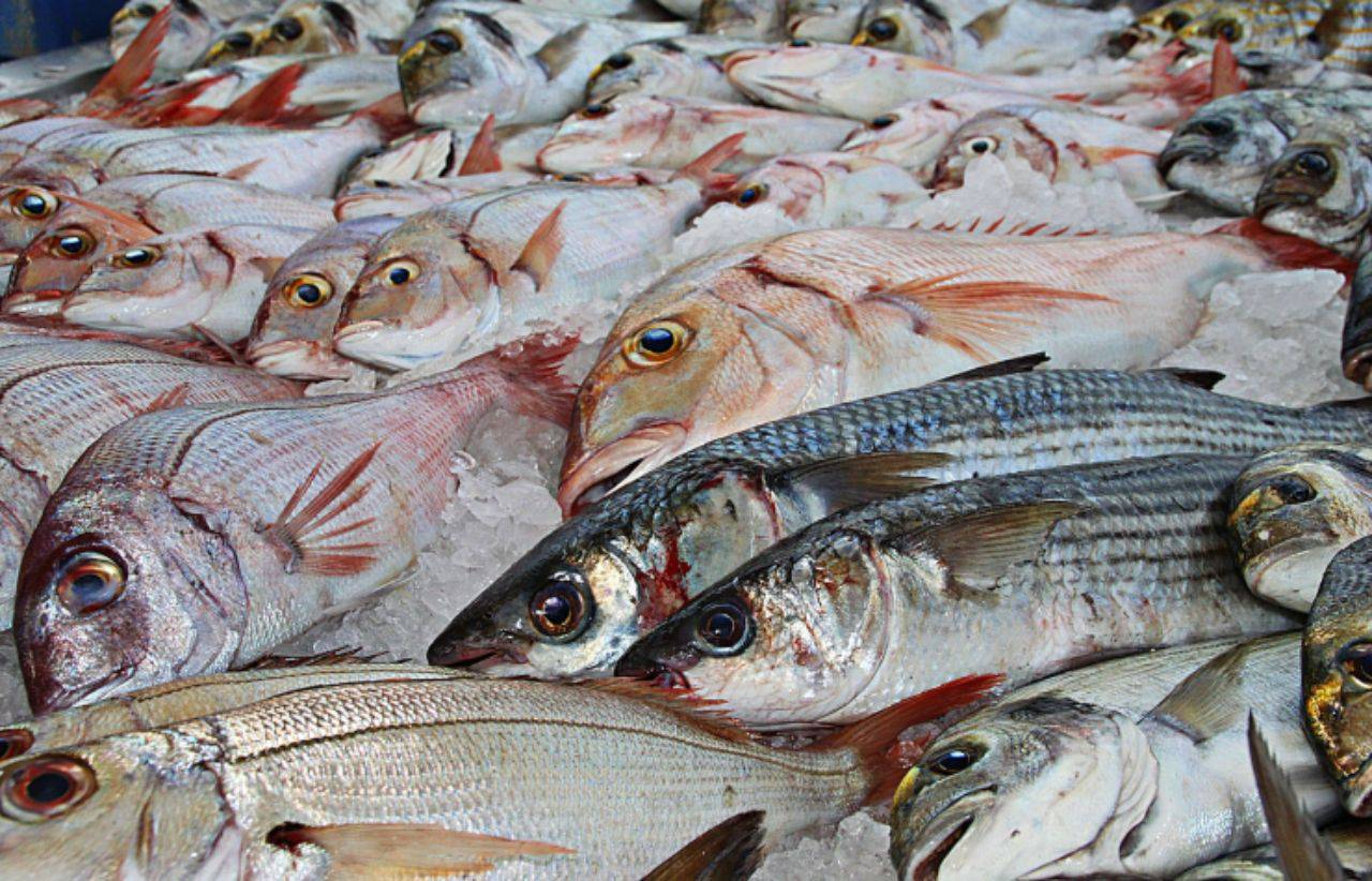 Convicnere bimbi pesce