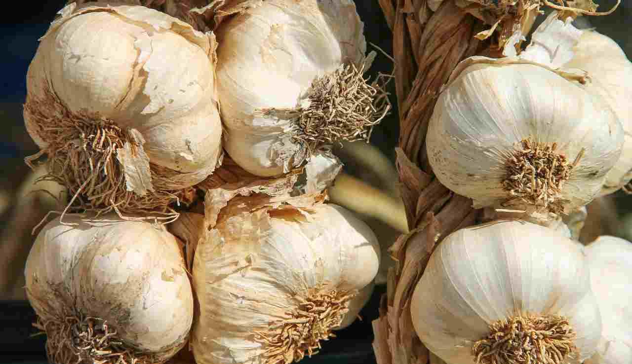 conservare aglio, trucchetti