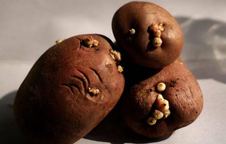 trucco conservare patate