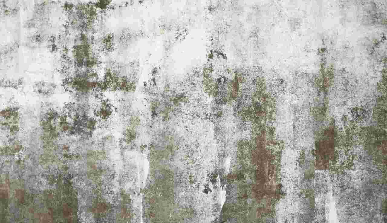 muffa su pareti, metodi