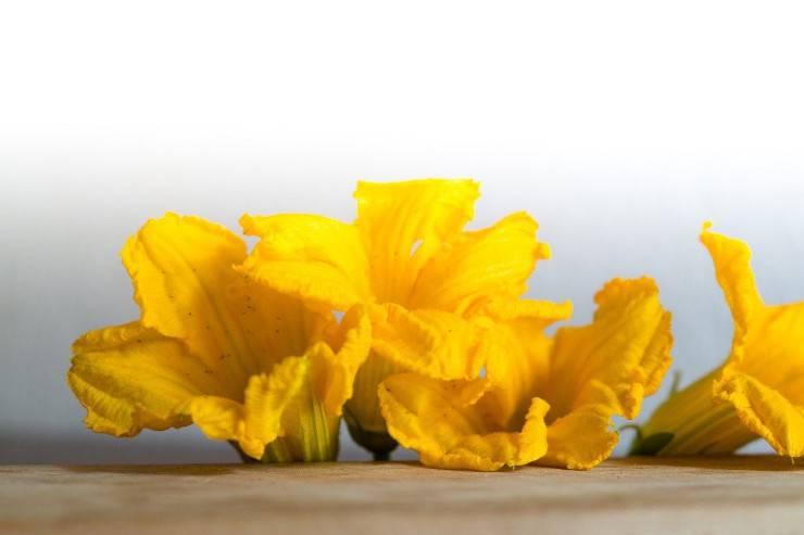 fiori di zucca freschi