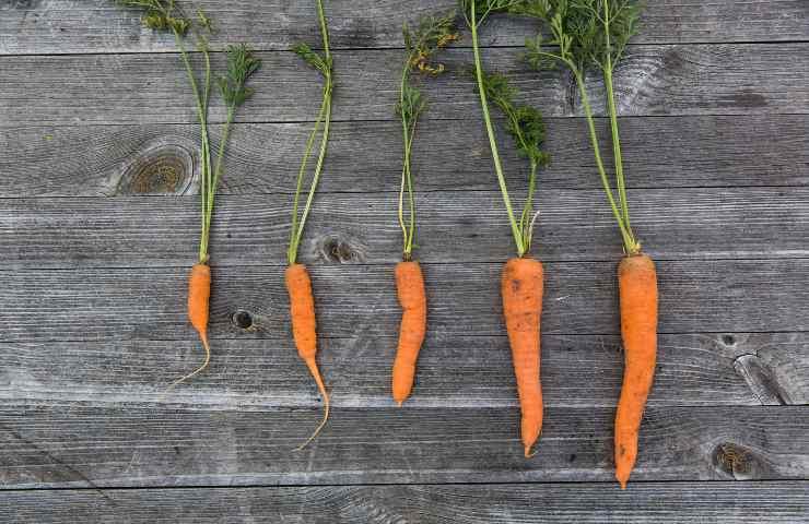 Chips carote forno ricetta veloce