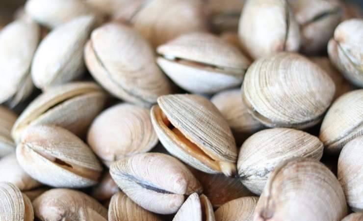 Vongole Lupino ritiro urgente escherichia coli