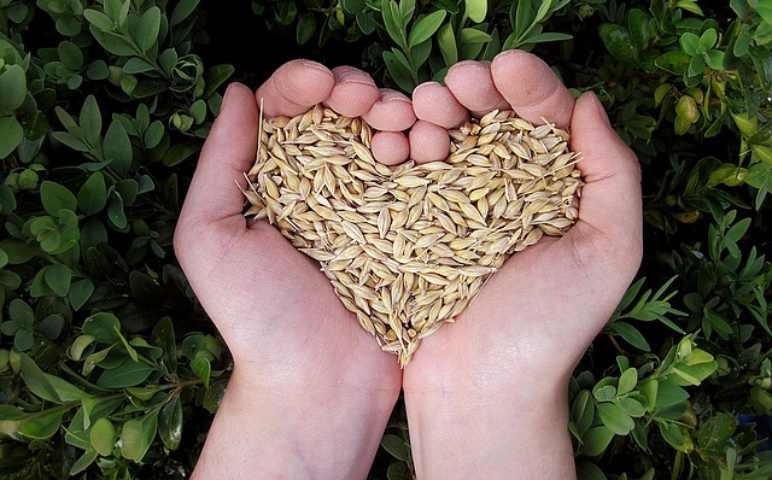 semi di lino per pressione alta